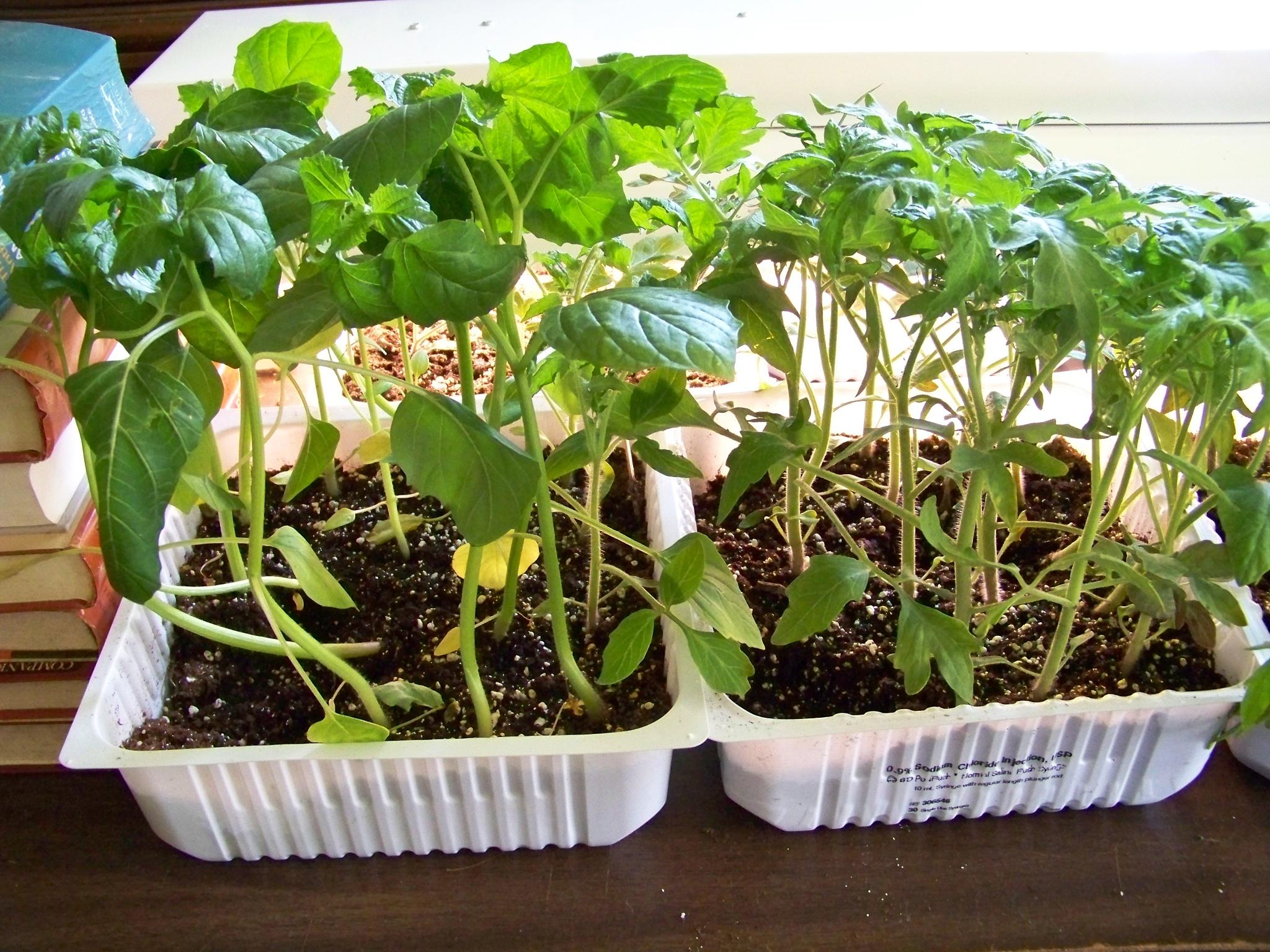 Gardening Series #8 Hardening Off