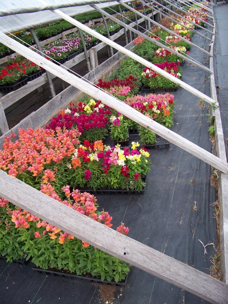 Sullivan Greenhouse Annuals