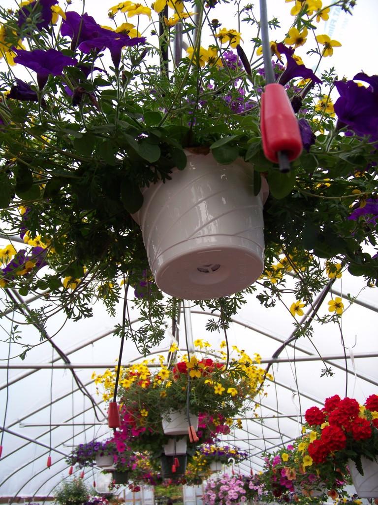Sullivan Greenhouse Ceiling