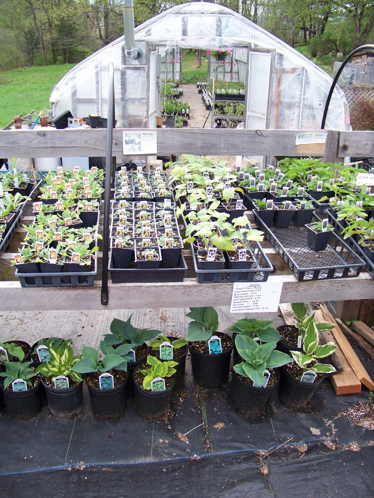 Sullivan Greenhouse, small perennials