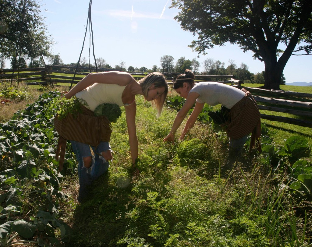 Harvesting veggies