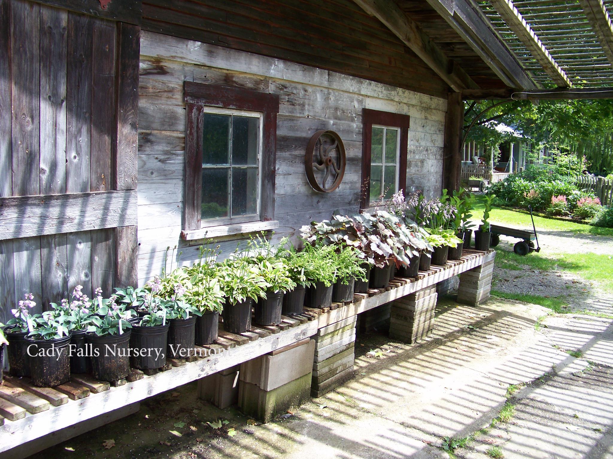 Cady Falls Nursery Part 2