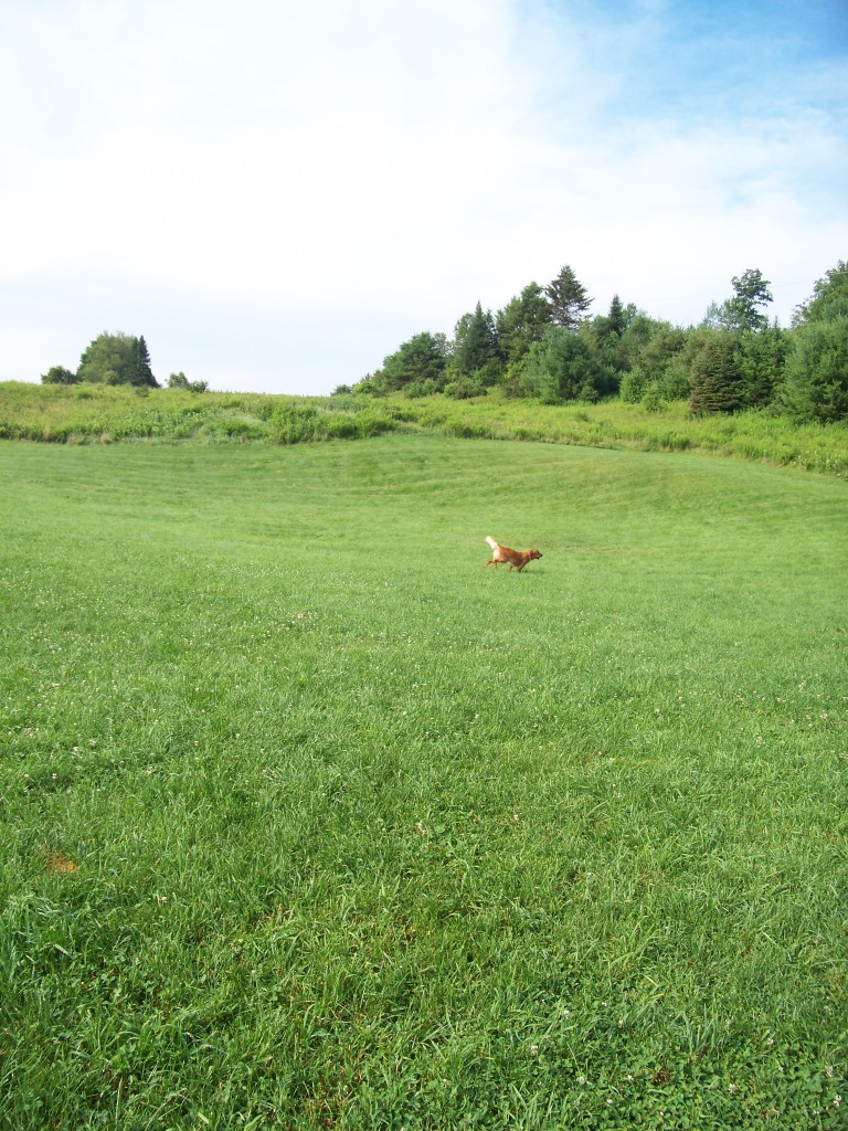 Dog Mountain field