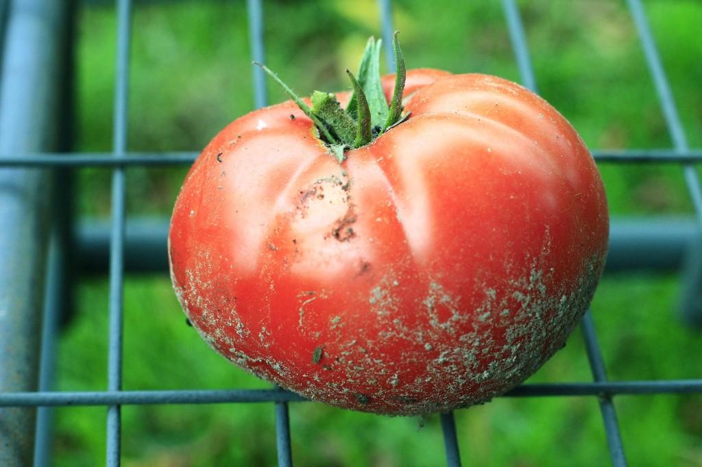 Tomatoe red