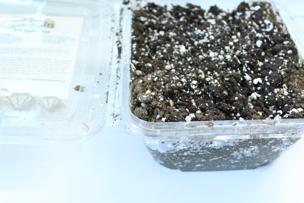 Olivia's Organics Container filled with soil showing depth.