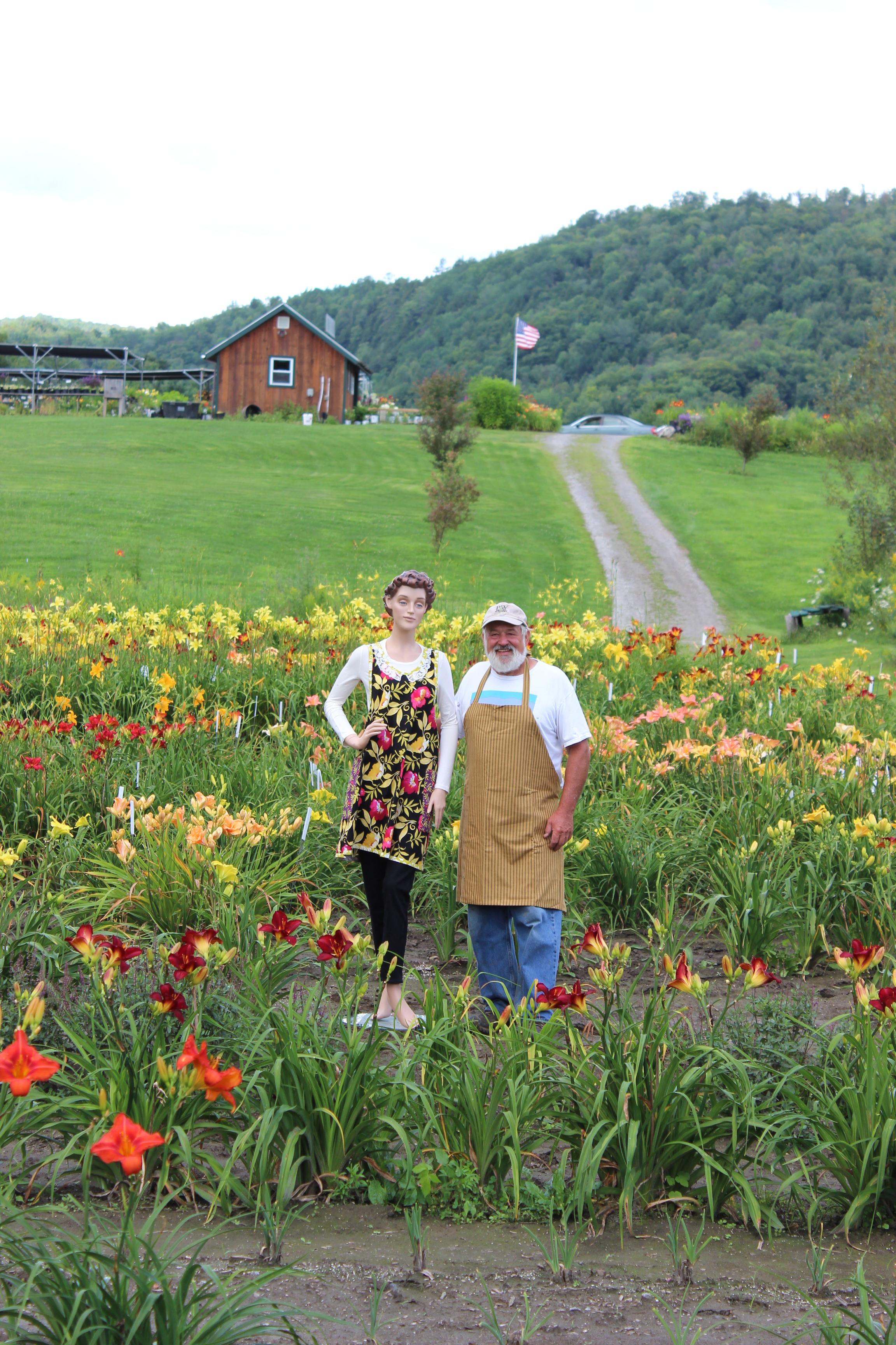 The Vermont Flower Farm-The Daylilies.